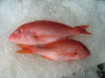 Red Fish Whole Snapper